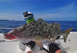Richard Long-nose Emperor Fish,  Andaman Popping