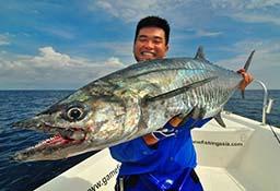 Spanish Mackerel Topwater Andaman