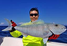 Green Jobfish Topwater Andaman