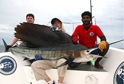 Sail-fish on topwater stickbait