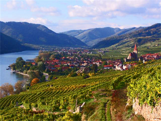 Terraced Vineyards Wachau