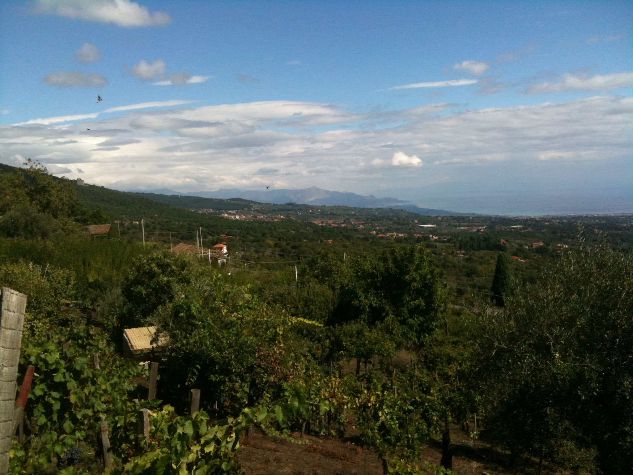 Enotria Vineyards