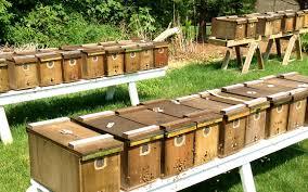 Snowy Beehives