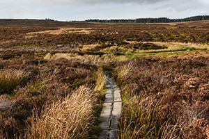 A narrow path winding through grasses