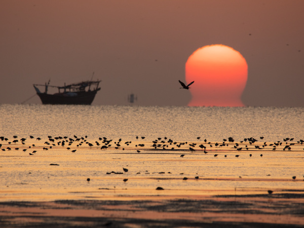Sunset at sea with a boat and waterbirds at Barr Al Hikman