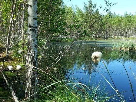 A Russian wetland scene