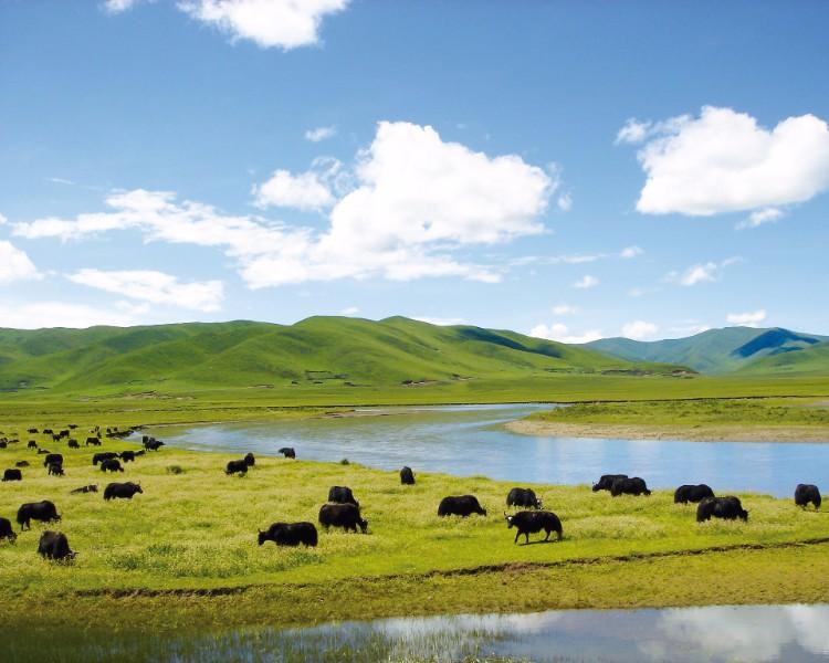 Wetland in Ruoergai, China
