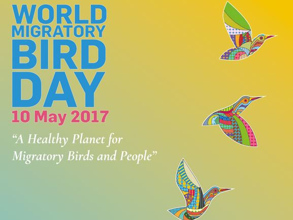 World Migratory Bird Day promotional poster
