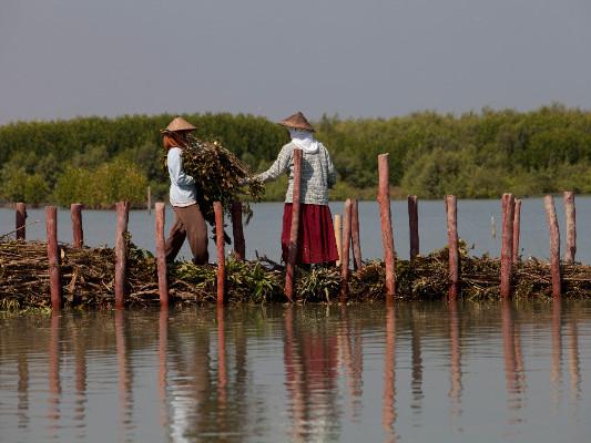 Indonesian women building a permeable dam