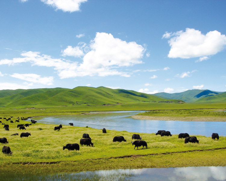 Wetland in Ruoergai, China, with hills, grassland, and ungulates