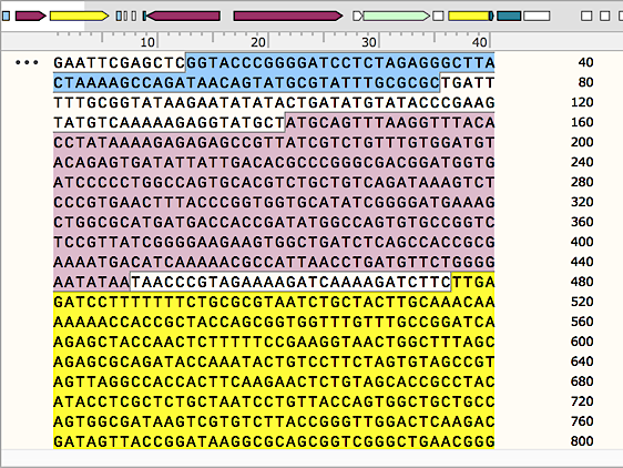 Compact Sequence View