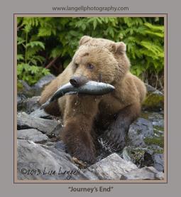 Lisa Langell Wildlife Photography