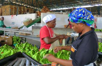 Banana packhouse workers