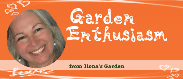 News from my garden... and elsewhere