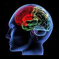 brain - neuroscience