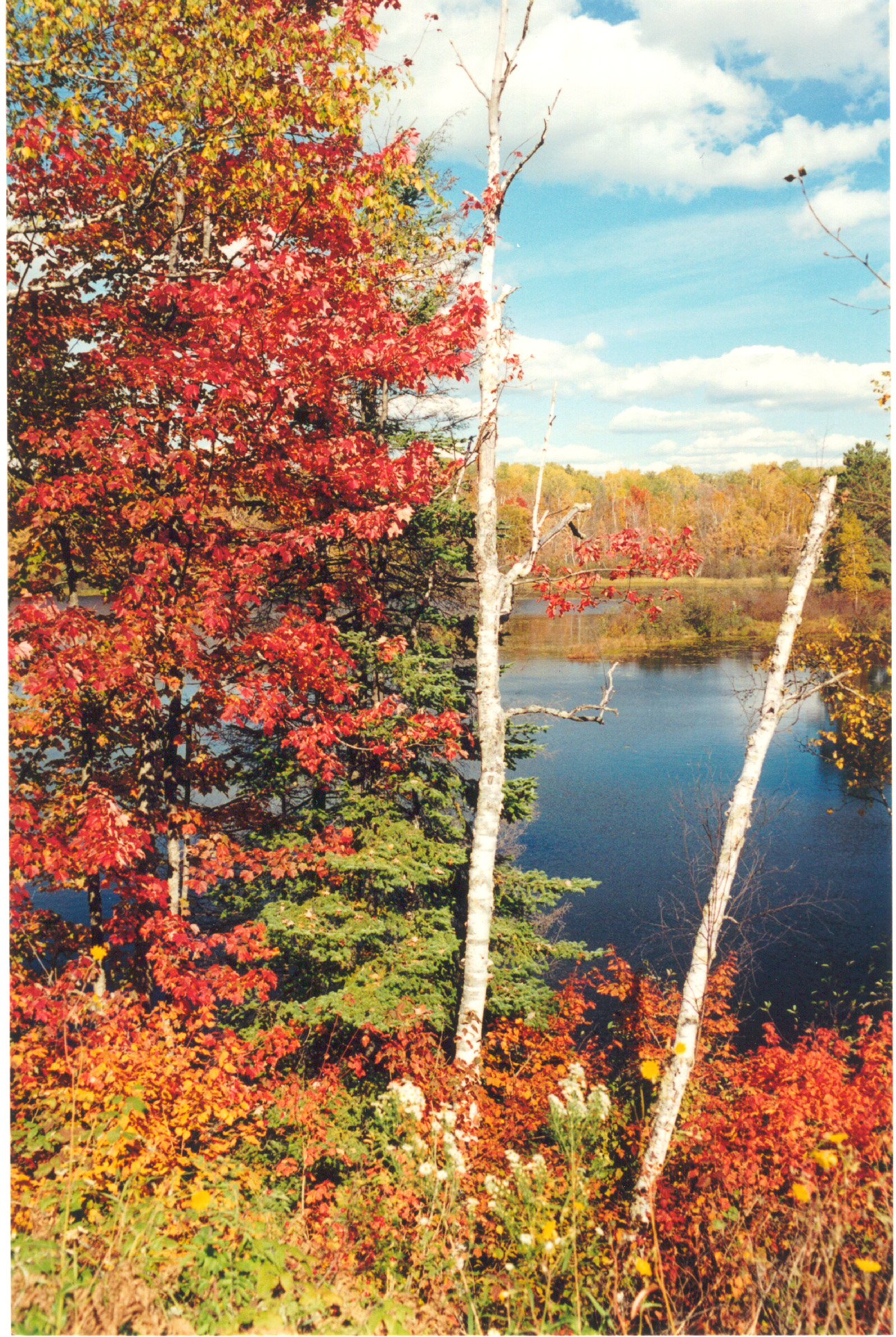 Fall leaves on the Edge of the Wilderness Scenic Byway