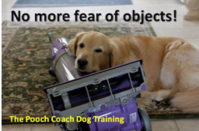 The Pooch Coach San Francisco Dog Training
