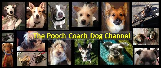 The Pooch Coach free dog training tips on Youtube
