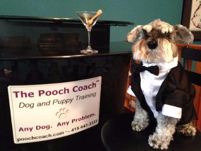 The Pooch Coach San Francisco Dog Training