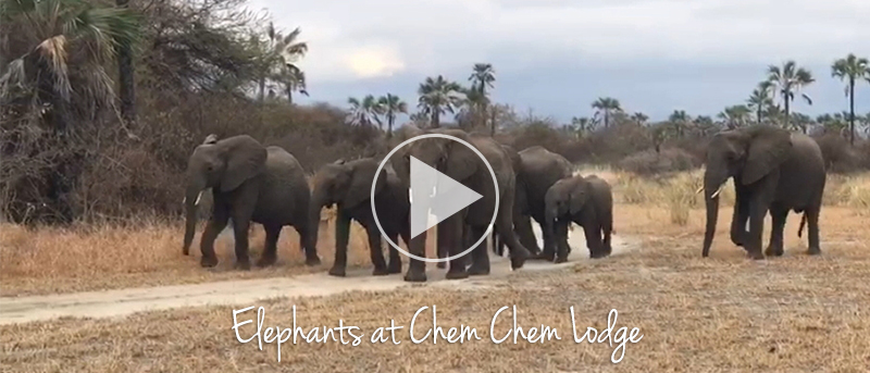 The elephants arrival at Chem Chem Lodge this week.