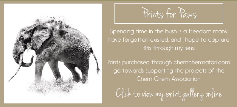 PRINTS FOR PAWS: Riccardo Tosi prints for sale in support of the Chem Chem Chem Association