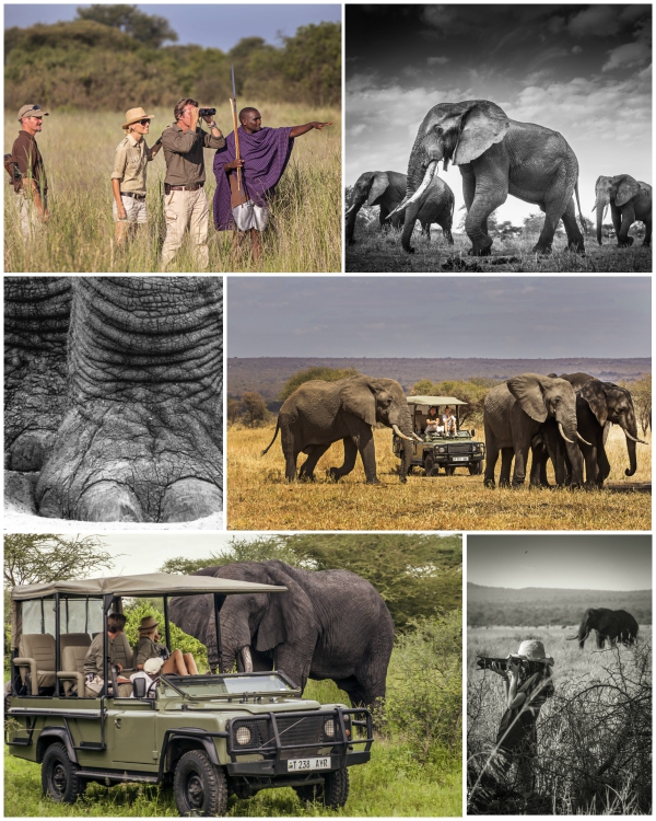 More than a safari... a lifestyle