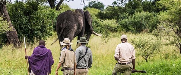 Walking with elephants...