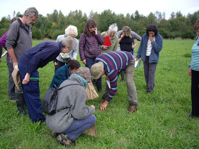 Identifying species within a hay meadow