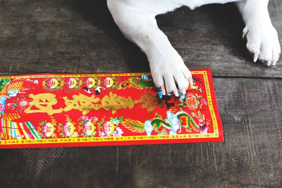 Happy Chinese New Year of The Dog