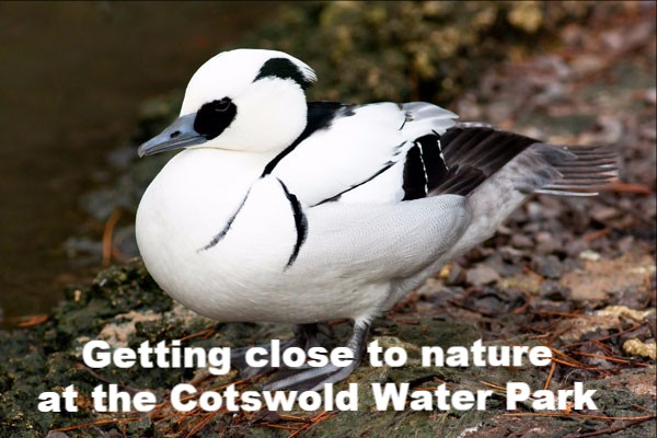 Cotswold Water Park (C) Dave Kilbey