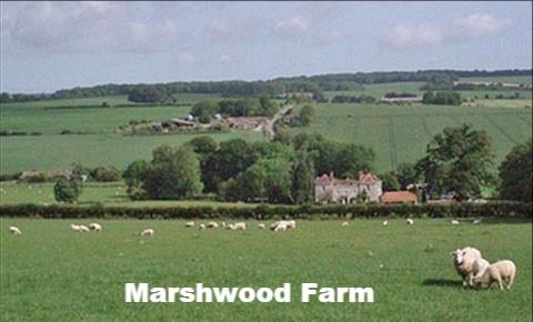Marshwood Farm B&B, self-catering and Shepherd's hut