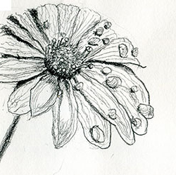 Drawing of a flower with dew