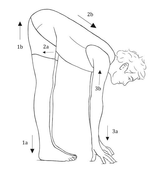 Uttanasana (Standing Forward Bend) Concave Spine Version