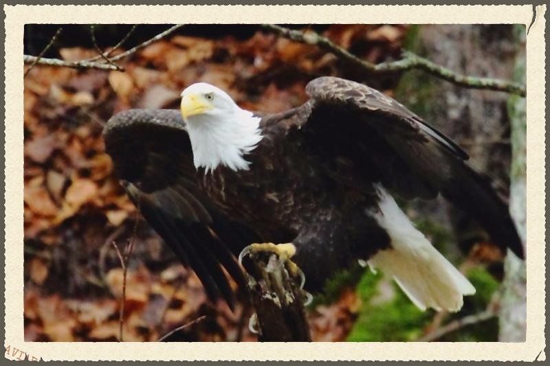 DHL Eagle Cam