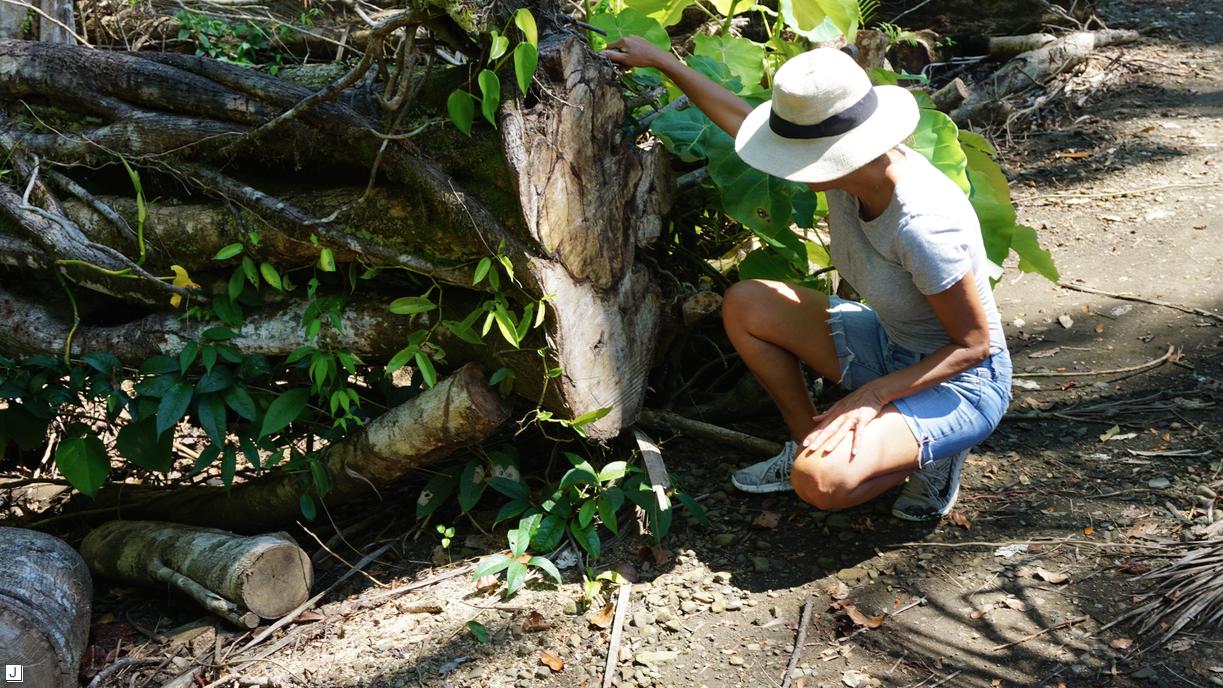 Dorit Schwartz Sculptor in Costa Rica