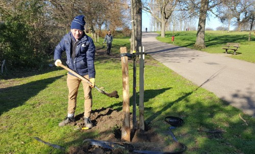 Tim planting one of the 39 avenue trees at Mountsfield Park funded by the Mayor of London Greener City Fund