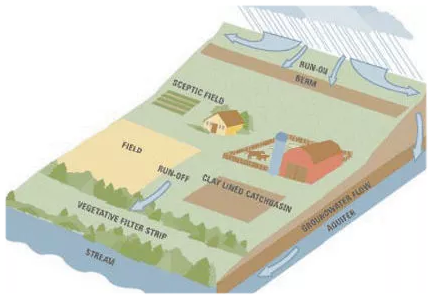 A healthy riparian area can protect the environment (Fairview Post)