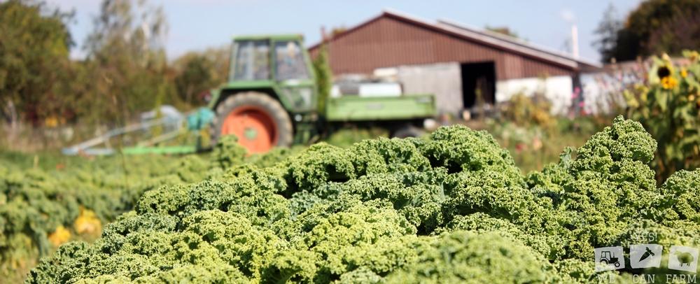 Traktor der Solidarischen Landwirtschaft Ravensburg / Grünkohl im Vordergrund