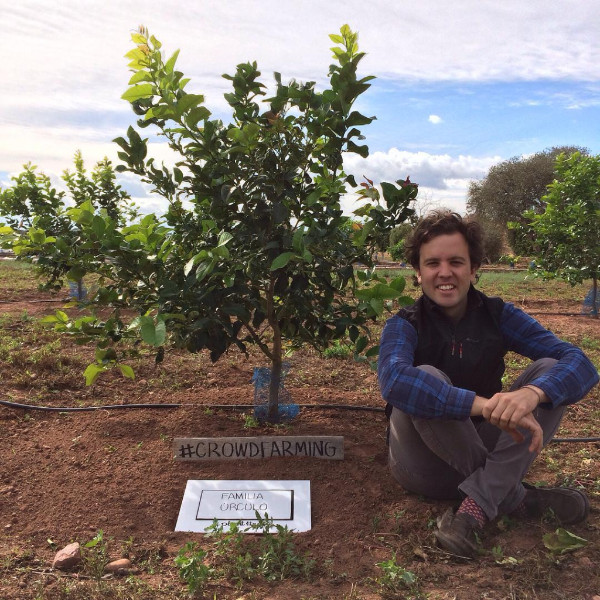 Crowdfarming: einen Orangenbaum pflanzen lassen