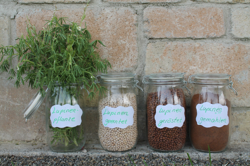 Lupinenkafee Entstehung, von der Pflanze bis zum gerösteten und gemahlenen Kaffee