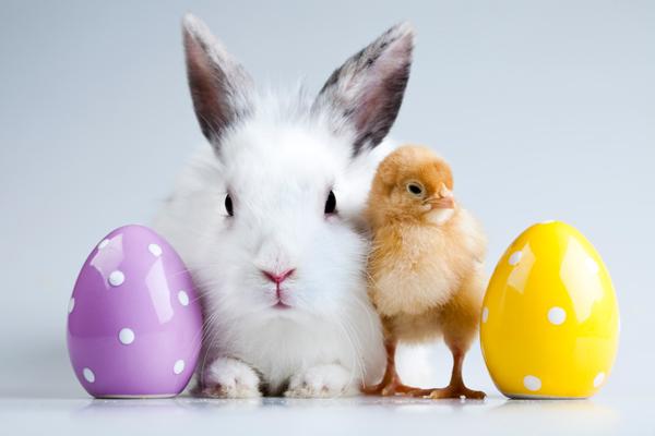 Egg, Bunny, Chick, Egg