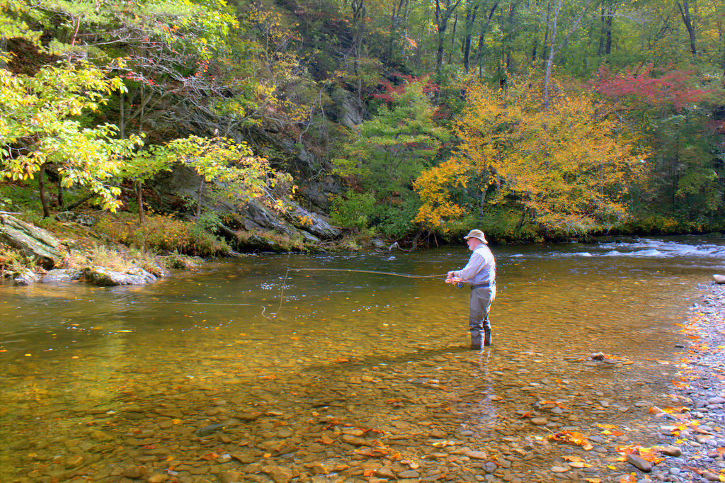 Fall fly fishing in Little River