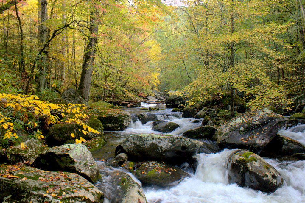 Middle Prong of Little River in autumn