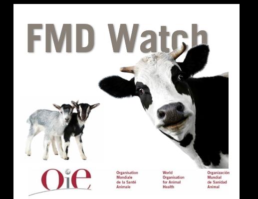 FMD Watch Logo