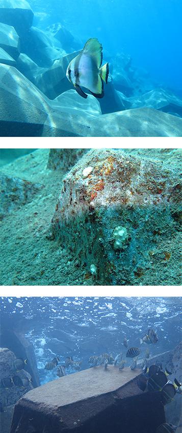 biodiversité sous-marine