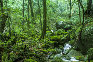 Forest Bathing in Japan