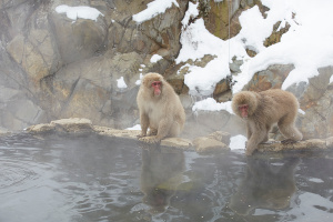 Direct bus service from Hakuba to the Snow Monkeys