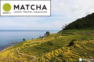 Rice harvesting experience at Shiroyone Senmaida, Ishikawa