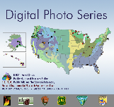 Digital Photo Series