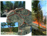 Lower North Fork Prescribed Fire Review